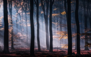 leaves, sunrise, sunlight, mist, landscape, sun rays