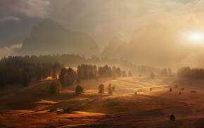 trees, mountain, sunlight, fall, nature, landscape