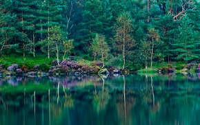 green, nature, grass, reflection, spring, forest