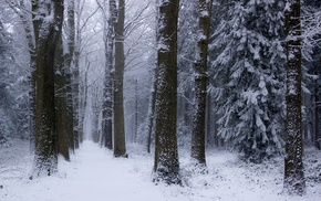 cold, snow, landscape, winter, forest, Netherlands