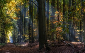 leaves, nature, landscape, fairy tale, trees, forest