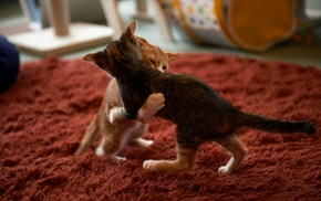 playing, cat, kittens
