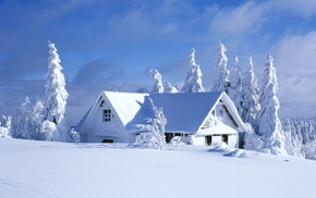 pine trees, hut, snow, cabin, winter