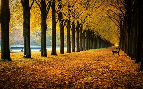 nature, fall, bench