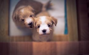 dog, puppies