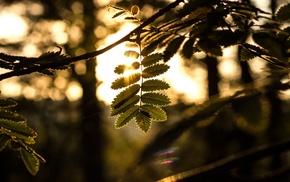 bokeh, nature, leaves