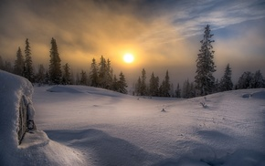 snow, cold, Norway, forest, pine trees, landscape