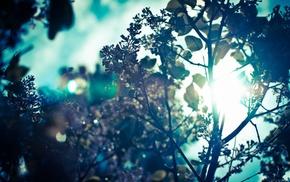 branch, trees, Sun, sun rays, leaves