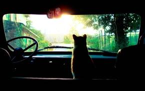 trees, sun rays, car, cat