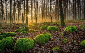 moss, forest, sun rays, landscape, nature, trees
