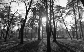 park, nature, Serbia, monochrome