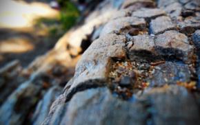 wood, closeup, nature
