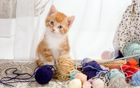cat, kittens, yarn, animals