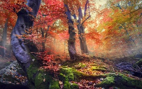 mist, moss, colorful, leaves, trees, nature