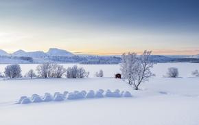 trees, landscape, winter