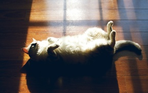 urban, Sun, cat