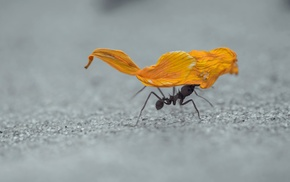 hymenoptera, ants, insect, sand, macro