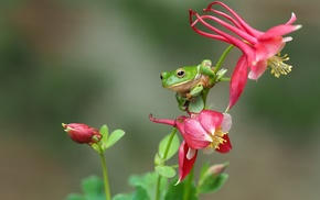 frog, animals, macro, amphibian