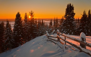 pine trees, snow, landscape, nature