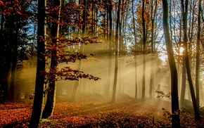 trees, sun rays, landscape, fall, morning, forest
