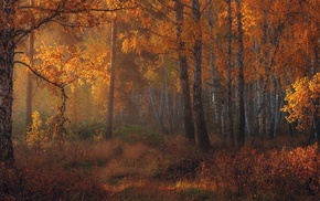 fall, amber, leaves, sunlight, trees, morning