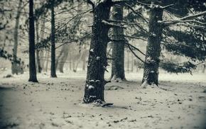 trees, snow