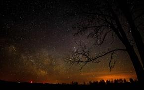 stars, trees, silhouette, night sky