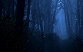 dark, Mystery, forest