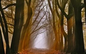 nature, trees, mist