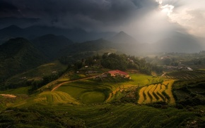 trees, village, sun rays, sunlight, rice paddy, tea
