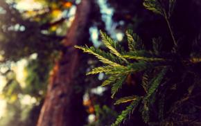 plants, trees