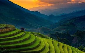 mist, landscape, rice paddy, nature, sunset, terraces