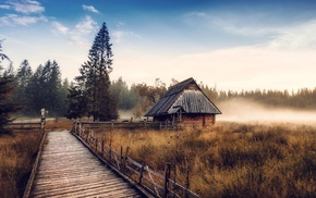 fall, mist, nature, dry grass, cabin, forest