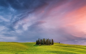 Italy, Tuscany, landscape, pine trees