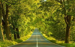 trees, road, nature