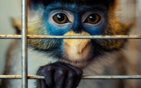 monkey, cages, animals