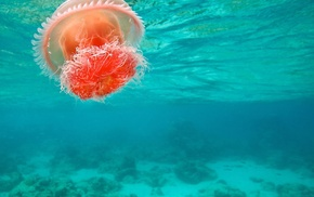 underwater, jellyfish, sea, nature