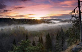 nature, forest, mist