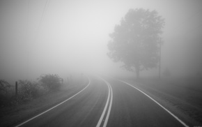photography, road, trees, monochrome, mist