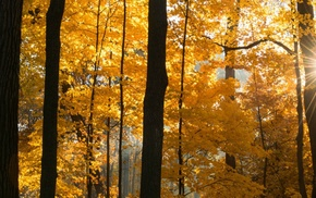 multiple display, forest, fall