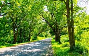 trees, Sri Lanka, nature, green, photography, road