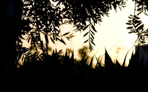 plants, silhouette, photography, nature, depth of field