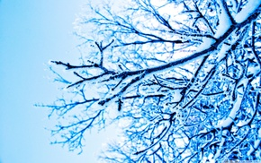 branch, ice, blue, photography, winter, trees