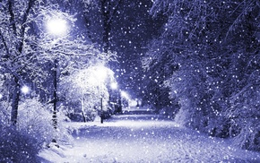 trees, park, lights, photography, winter, filter