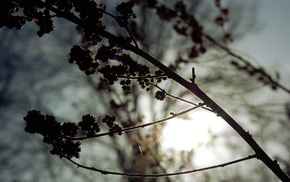 nature, depth of field, silhouette, photography, branch, plants