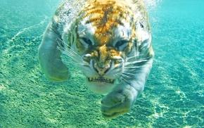 underwater, tiger, animals