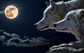 wolf, Moon