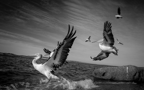 animals, sea, birds, nature