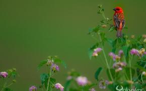 animals, birds, nature