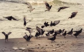 birds, animals, photography